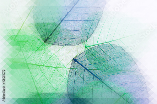 Poster Squelette décoratif de lame Decorative skeleton leaves, abstract background