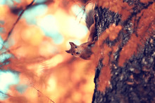 Cute Squirrel In The Autumn Forest