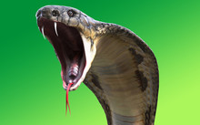 Close-Up Of 3d King Cobra Snak...