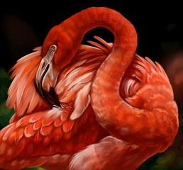 Fototapeta Zwierzęta фламинго