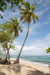 Sand Strand auf der Karibik Insel Dominika auf den kleinen Antillen mit Meer und Palmen als Hintergrund.