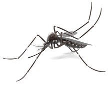 3d Render Of Aedes Aegypti