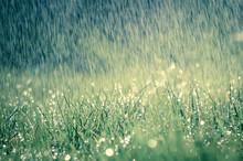 Frühlingsregen Auf Wiese Mit Leichtem Farbeffekt