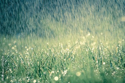 Fotografie, Obraz  Frühlingsregen auf Wiese mit leichtem Farbeffekt