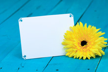 White Note Card By Sunflower