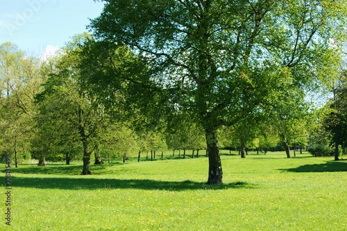 A park landscape in the Springtime,