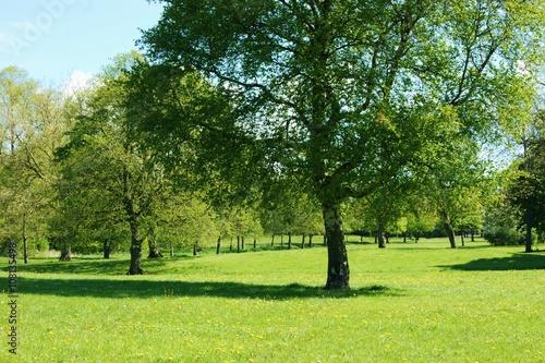 A park landscape in the Springtime,