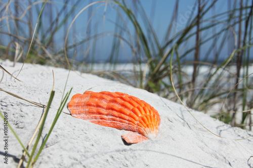 Fotografie, Obraz  Sea shell