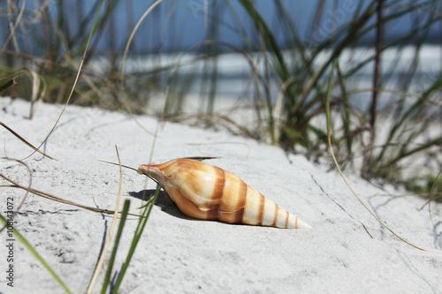 Obraz na plátně  Sea shell