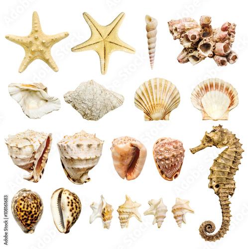 Obraz na plátně  composition of most common seashells and mollusk