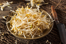 Raw Healthy White Bean Sprouts