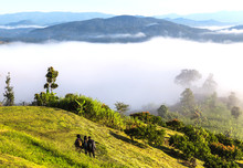 Scenery Of Misty Morning On The Top Of The Hill During Sunrise At Yun Lai Viewpoint, Pai, Thailand.