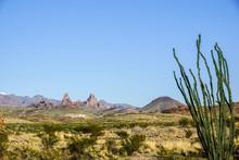 Big Bend National Park Cactus ...