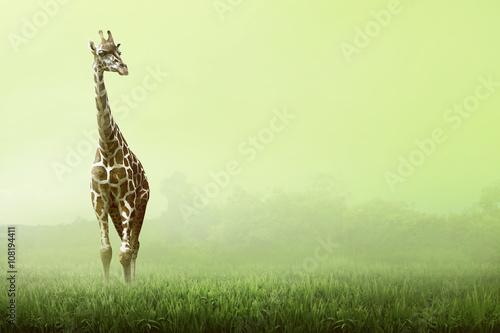 Photo  Girrafe standing on the grassland