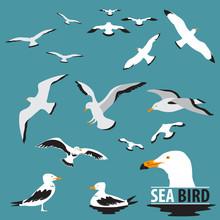 Set Of Sea Bird And Seagull Vector