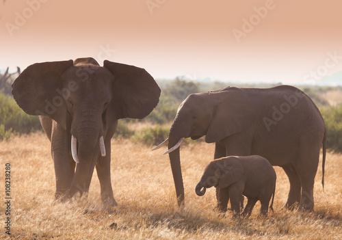 fototapeta na lodówkę Family elephants on african savannah in misty dusty lights