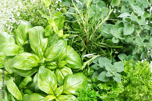 Closeup fresh herbs. Parsley basil rosemary thyme mint