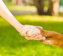 Friendship Between Human And Dog - Shaking Hand And Animal Paw