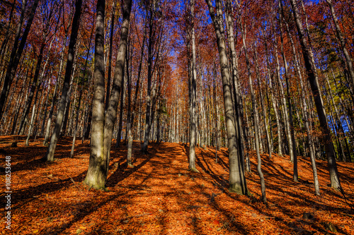 Poster Marron chocolat Colorful autumn trees