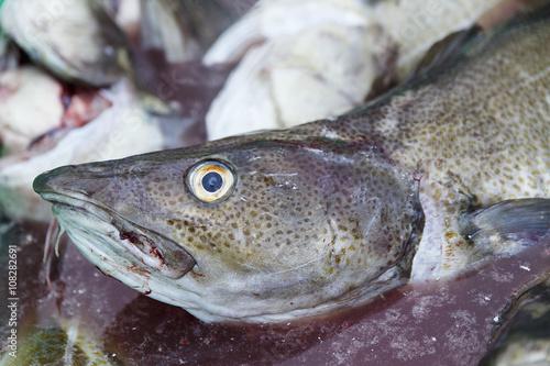 Fotobehang Vissen fresh cod-lofoten