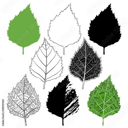 Birch leaf, isolated elements for design on a white background. Wall mural