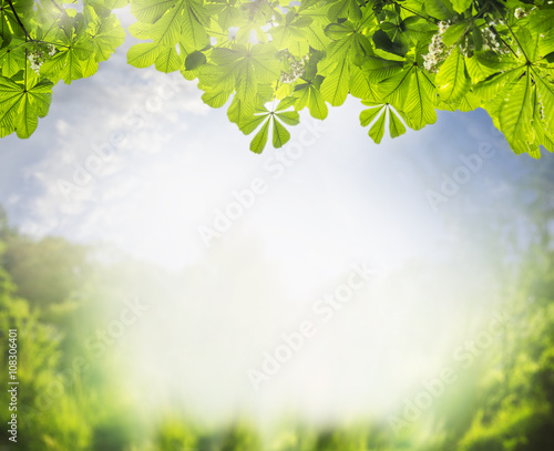 Summer landscape with green foliage of the chestnut tree