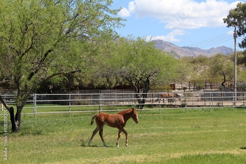 Photo  Beautiful Foal Grazing in the Field