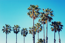 Palm Trees At Santa Monica Beach. Vintage Post Processed. Fashion, Travel, Summer, Vacation And Tropical Beach Concept.