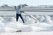 Sea Salt Harvesting In Pak Thale, Phetchaburi, Thailand