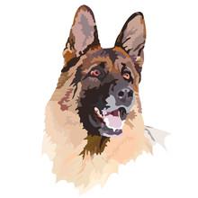 Dog/ シェパード、戌、犬