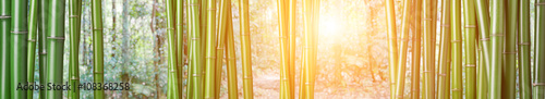 Tuinposter Bamboo green bamboo background