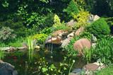 Fototapeta Kamienie - Rockery and pond