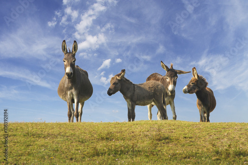 Herd of wild donkeys in the meadow