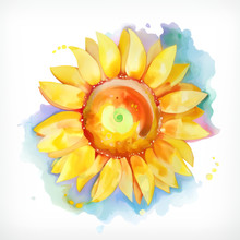 Watercolor Painting, Sunflower, Vector Illustration, Isolated On A White Background