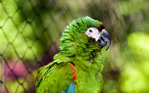 Severe Macaw Parrot Face Canvas Print