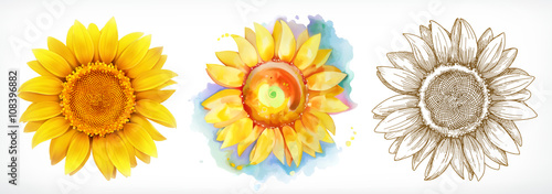 Sunflower, different styles, vector drawing, icon set Fotobehang