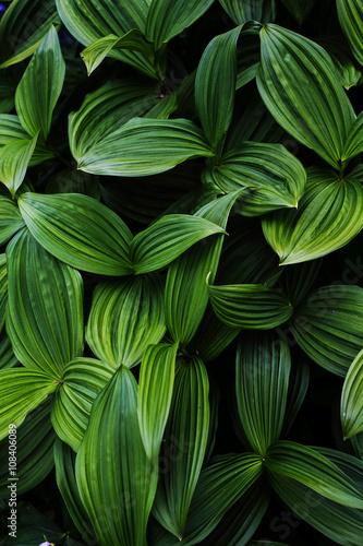Láminas  緑の葉