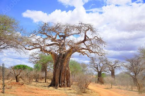 In de dag Baobab Baobab or boab, boaboa, bottle tree, upside-down tree, and monkey bread tree Tarangire National Park is the sixth largest national park in Tanzania after Ruaha, Serengeti, Mikumi, Katavi and Mkomazi
