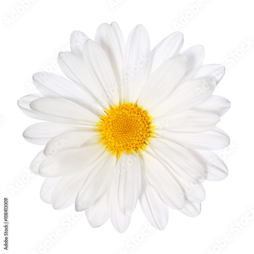 In de dag Madeliefjes Chamomile flower isolated. Daisy. Macro