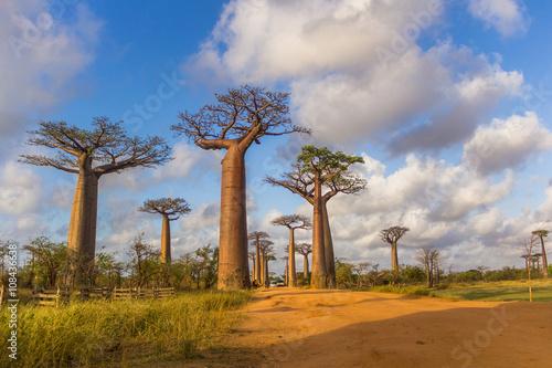 Staande foto Baobab Allée des baobabs Madagascar