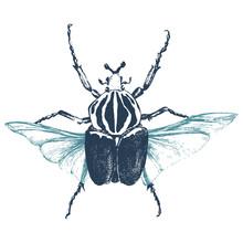 Hand Drawn Goliath Beetle