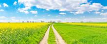 Frühlingsweg