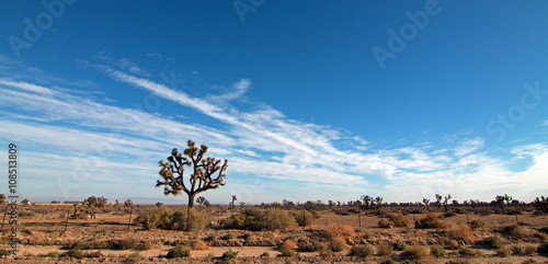 Valokuvatapetti Joshua Tree cloudscape in Southern California high desert near Palmdale Californ