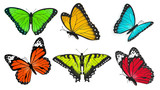 Set of realistic, bright and colorful butterflies, butterfly vector illustration