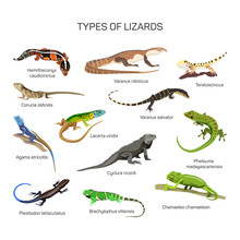 Lizards Vector Set In Flat Sty...