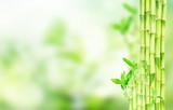Fototapeta Sypialnia - green bamboo stems