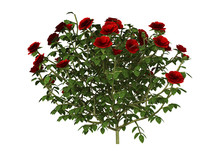 3D Illustration Red Rose Bush ...