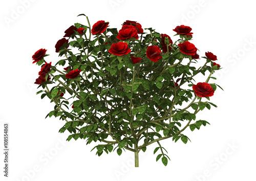 Foto  3D Illustration Red Rose Bush on White