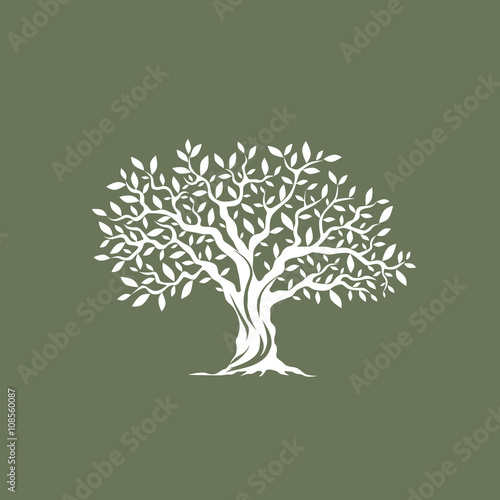 Foto  Beautiful magnificent olive tree silhouette on grey background