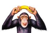 Szympans trzyma banana ręce nad głową. Akwarela ilustracja - 108593852